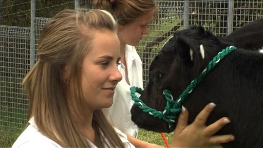 Student touching cow